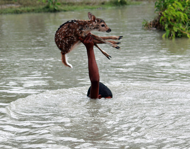 167 Brave Boy Risks Own Life to Save a Baby Deer from Drowning