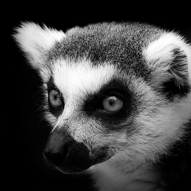 Beautiful Black And White Photography of Animals Animals Selfies in Black White