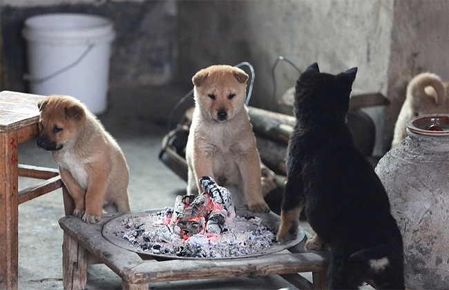 160 Puppies Around Fire Pit For Warmth