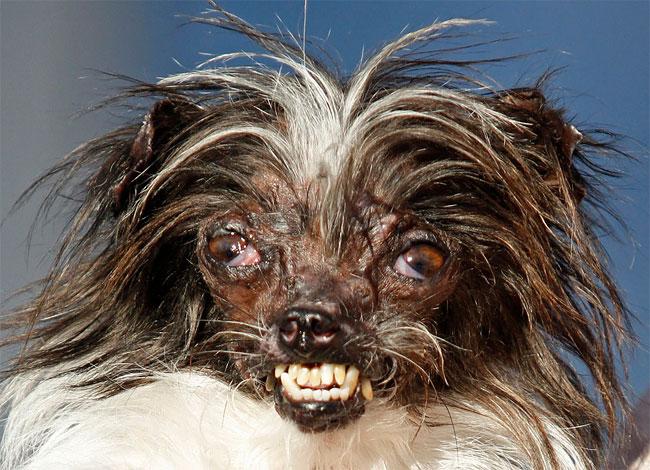1180 Worlds Ugliest Dog