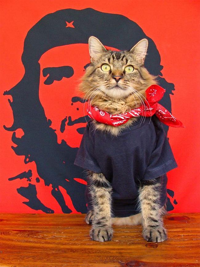 1193 Lorenzo The Cat by Joann Biondi