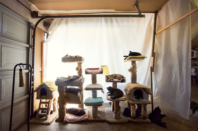 159 The Cat House on the Kings is the Largest Cat Sanctuary