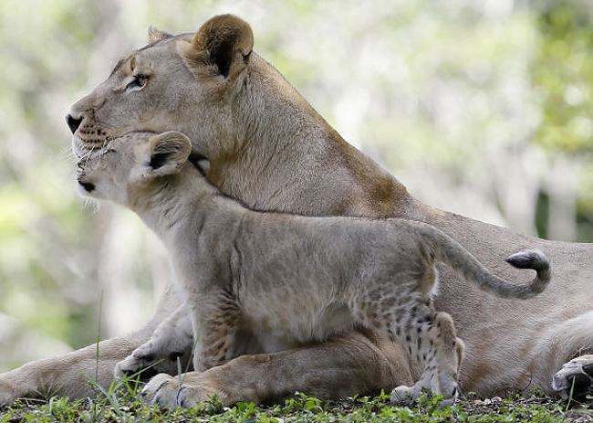 170 Baby Zoo Animals, Part 1