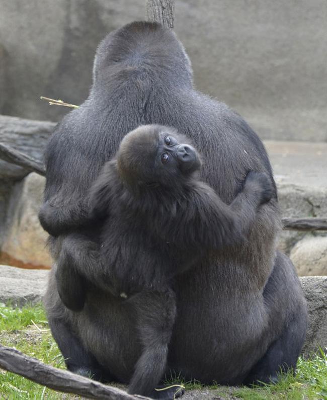 177 Baby Zoo Animals, Part 2