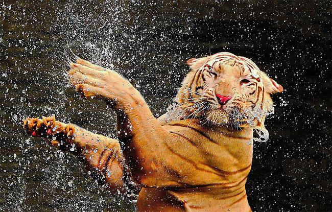 1144 How Animals Chill in Summer Heat
