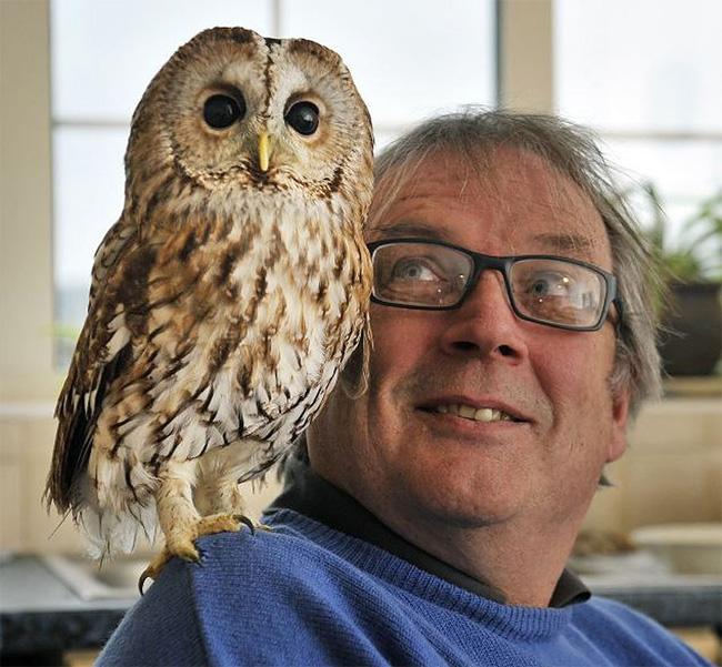 16 Bertie, the Agoraphobic Owl