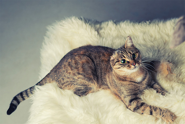 3 Pretty Lovely One Eared Kitty is Looking for the New Home