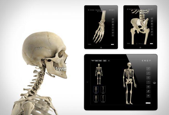 skeleton system pro 3 large 650x444 Skeletal System Pro III