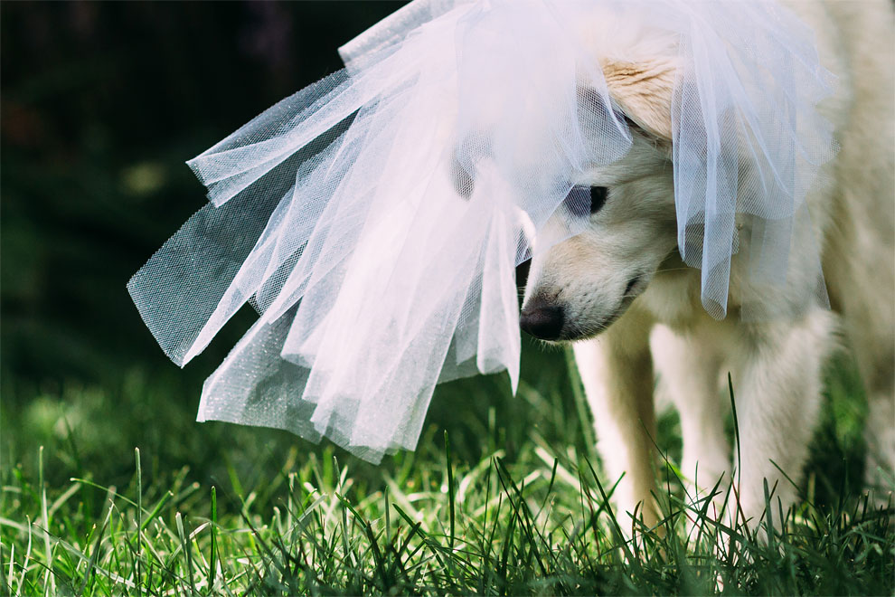 1202 Rescue Dogs Wedding