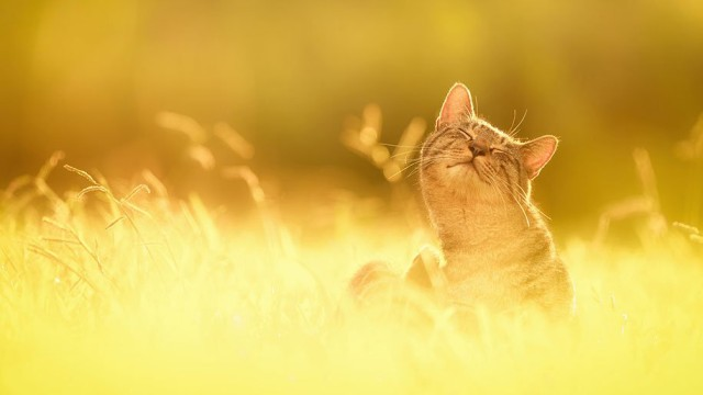 1395987495 3 640x360 Awesome Cat Photography by Seiji Mamiya