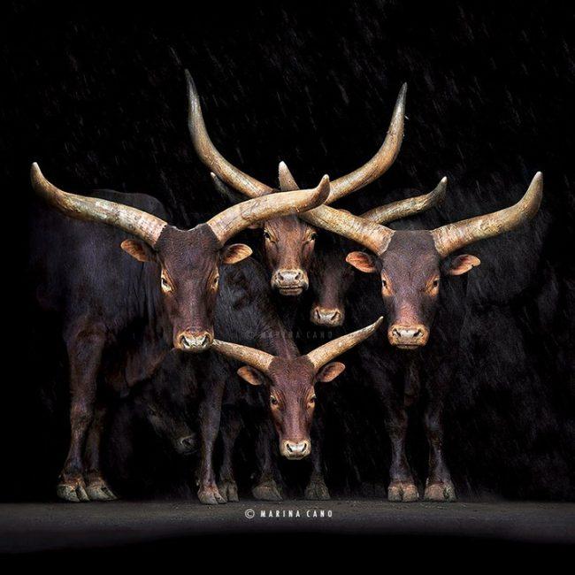 Splendid Wild Animals Photos by Marina Cano 17 650x650 Splendid Wild Animals Photos by Marina Cano