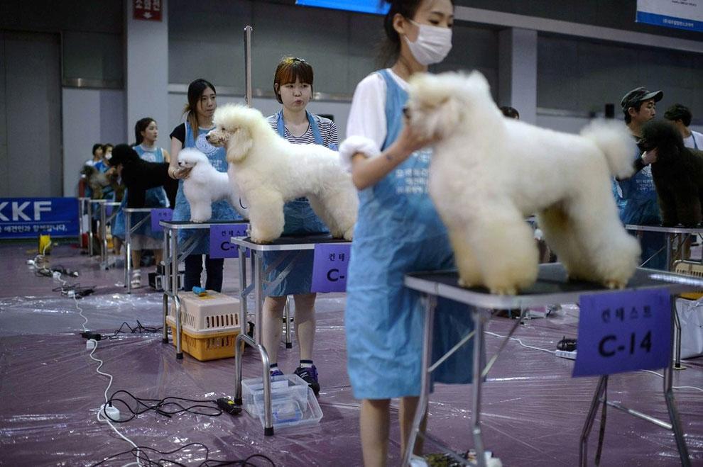 11 A Dog Show in Seoul