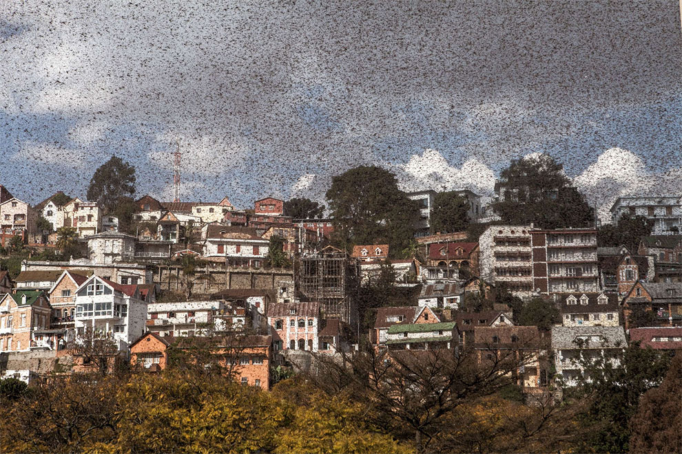 130 Photo of the Day: The Swarm