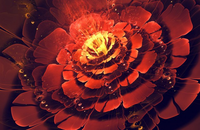 1352789904 0 640x415 Fractal Flowers by Silvia Cordedda