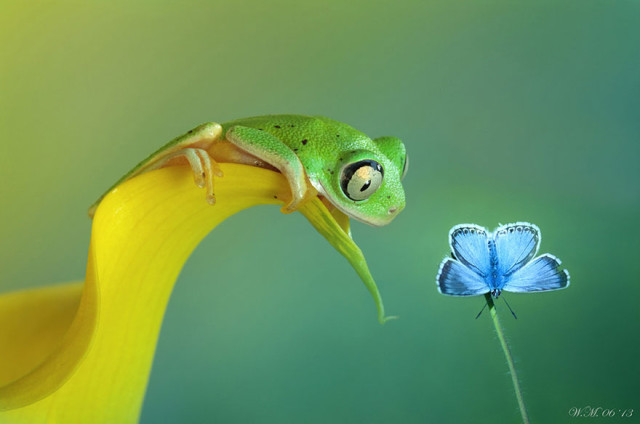 1401987790 1 640x424 Stunning Frog Photography by Wil Mijer