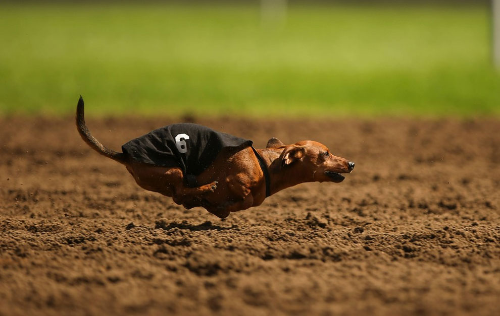 180 A Dog Race in Shakopee, Minnesota