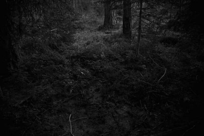 Ken Rosenthal 650x433 The Forest by Ken Rosenthal