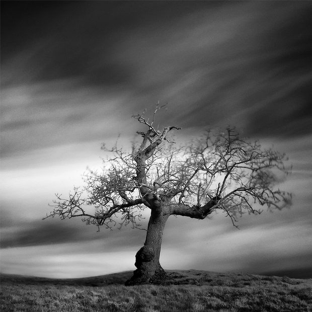 004 tree andy lee One, Two, Tree by Andy Lee