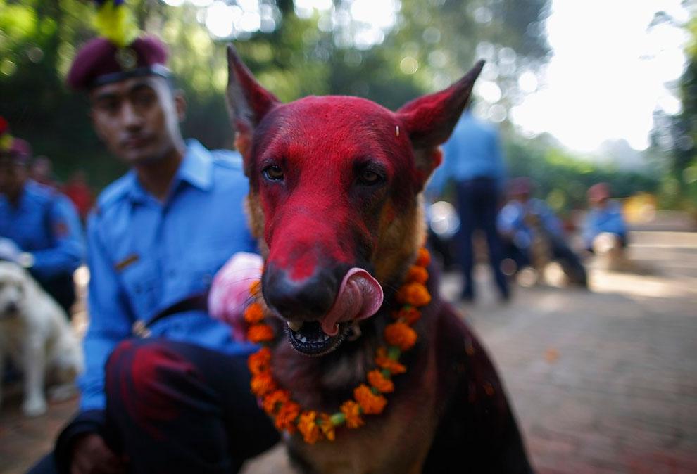 1305 Dog Worship Day in Nepal
