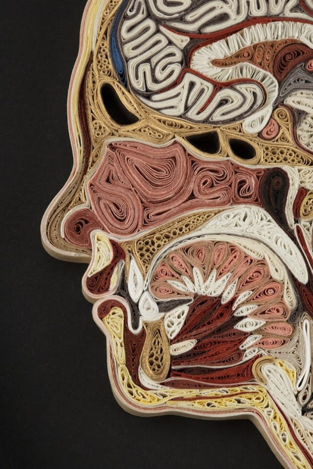 1359985664 1 640x960 Anatomical Quilling by Lisa Nilsson