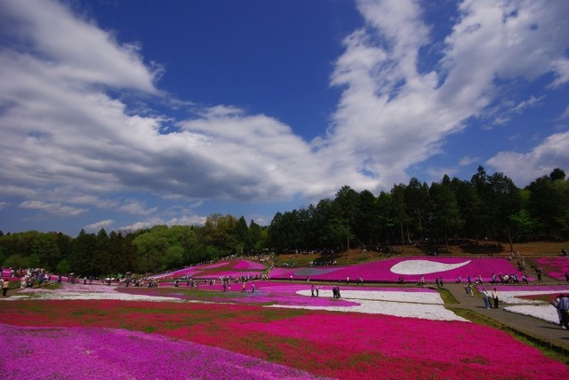 1362216475 1 640x428 The Floral Beauty of Hitsujiyama Park