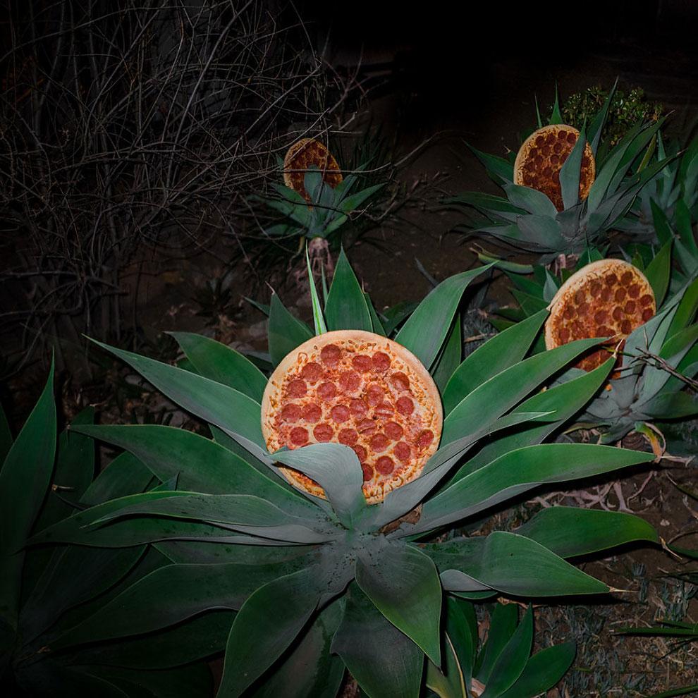 199 Pizza in the Wild by Jonpaul Douglass