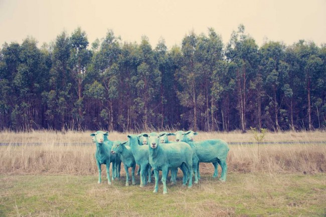 BLUE SHEEP 650x433 The Dream Series by Gray Malin