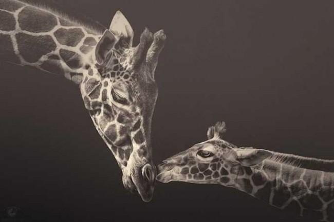Manuela Kulpa 650x433 Zoo Animals by Manuela Kulpa