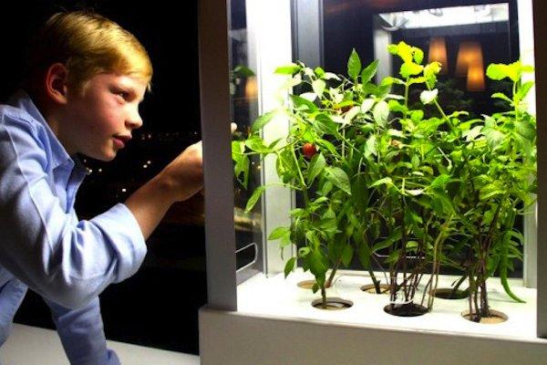 Niwa Grow Indoor Garden With Phone 04 Niwa: Grow Indoor Garden With Phone