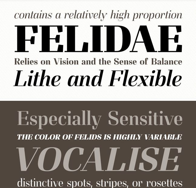 md6 e1413190617365 Typomancers Complete Felis Font Family   Slab Serif, Didone   only $20!