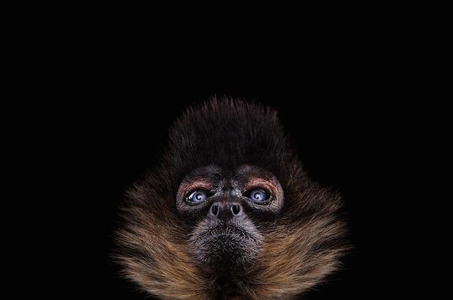 wild animals portraits everythingwithatwist 02 Wild Life by Brad Wilson
