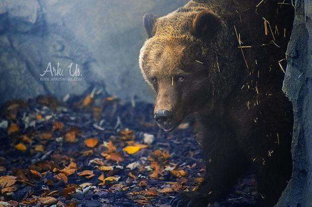 001 animal photography julia bnard Animal Photography by Julia Bénard