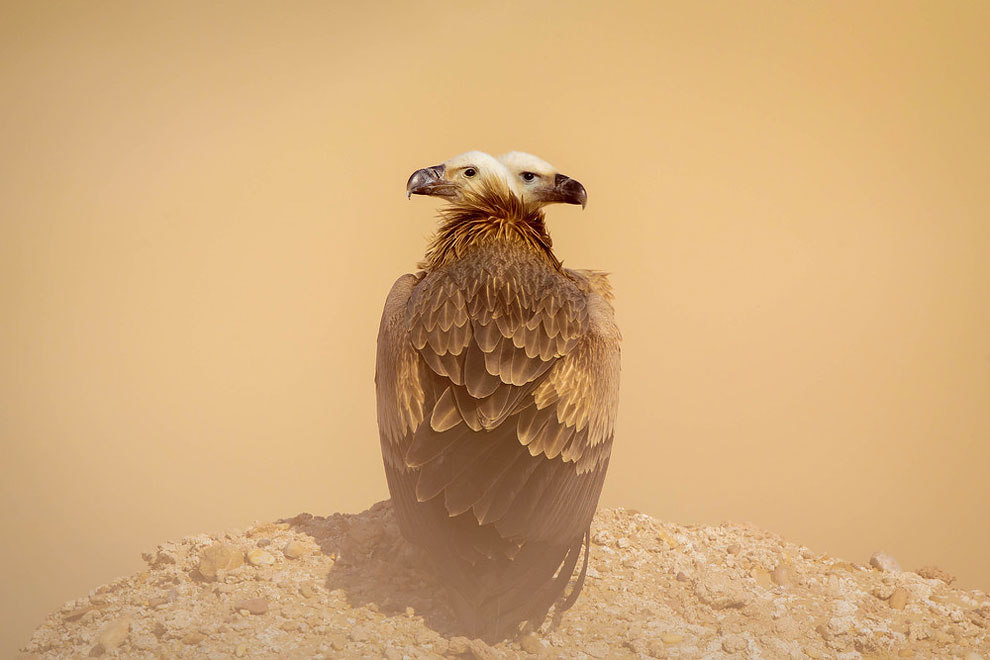 1100 2014 National Geographic Photo Contest, Week 9, Part 4