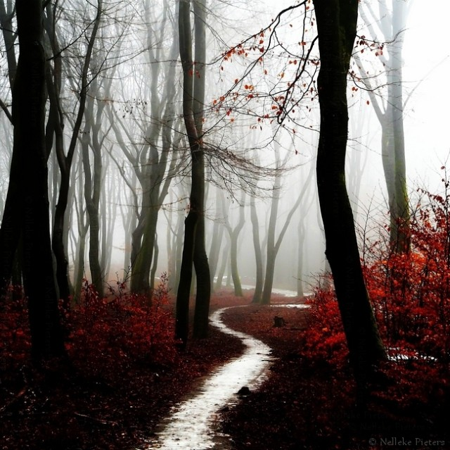 1368388065 30 640x639 Amazing Fall Landscape Photography by Nelleke Pieters