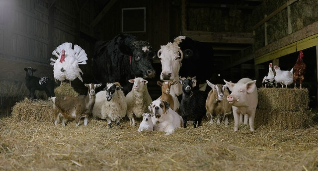 1370411917 1 640x344 Farm Family Portraits Photo Project by Rob MacInnis