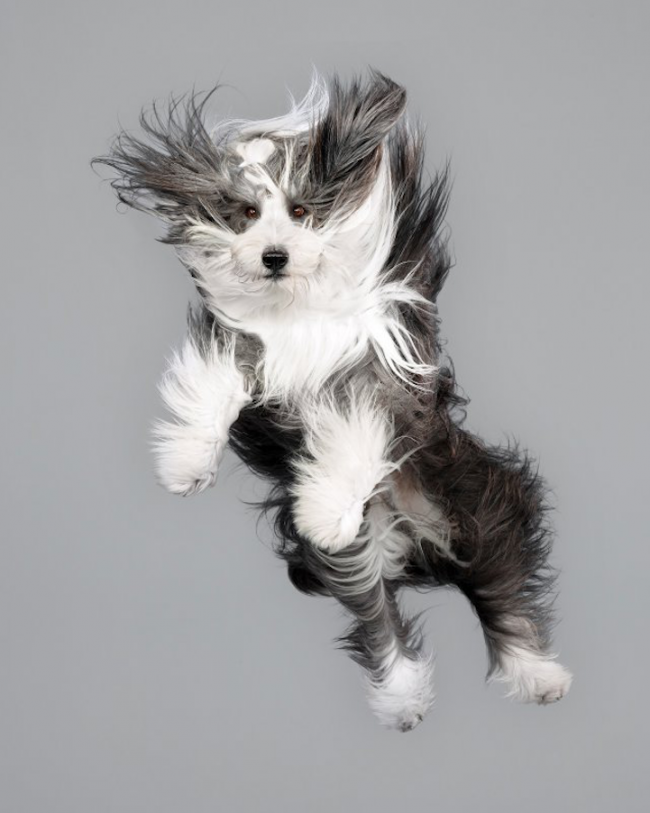 JuliaChriste2 650x813 Hilarious Portraits of Cute Dogs Floating in Mid Air