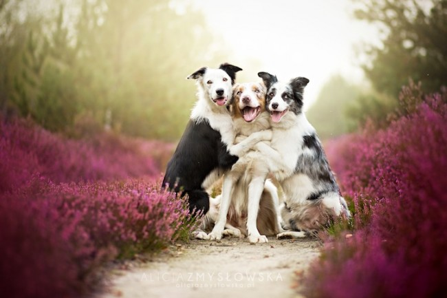 alicja00 650x433 Adorable Dog Photography That Will Make You Happy by Alicja Zmyslowska