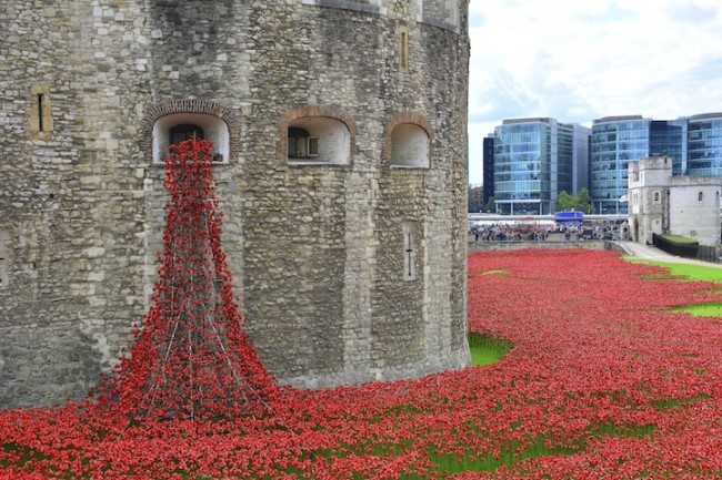 poppies 04 650x433 Stunning Installation of 888,246 Ceramic Poppies Honors Lives Lost in WWI
