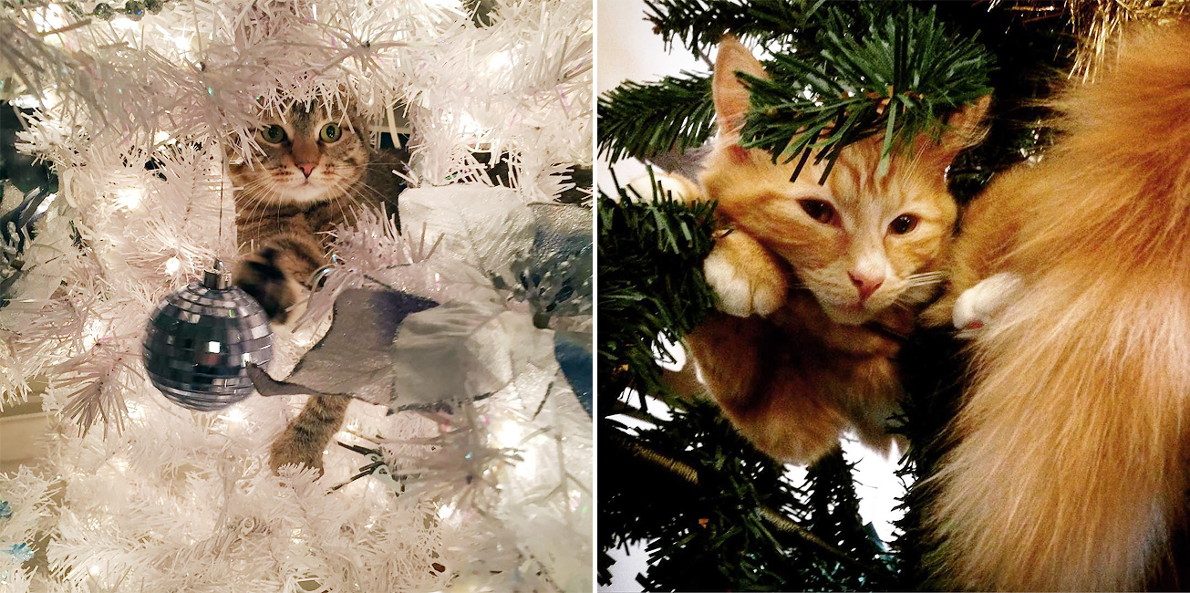 Cats In Christmas Trees Is Our New Instagram Obsession