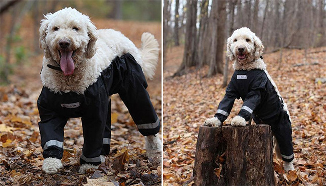 dog pants are all the rage this year in pet fashion design you