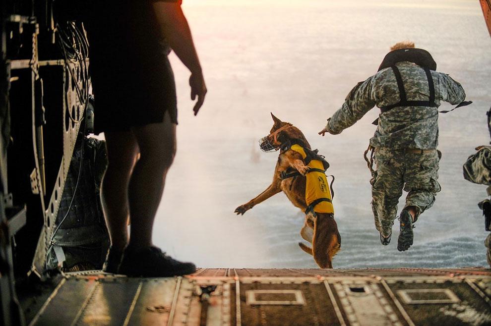 Best Animals Army Adorable Dog - 1-29  Gallery_43821  .jpg