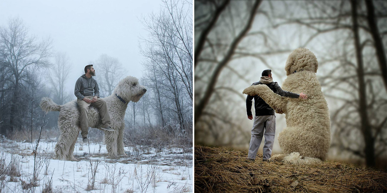 This Guy Photoshops His Dog Into A Giant In All His Pics And Its - Guy uses photoshop to turn his miniature dog into a giant