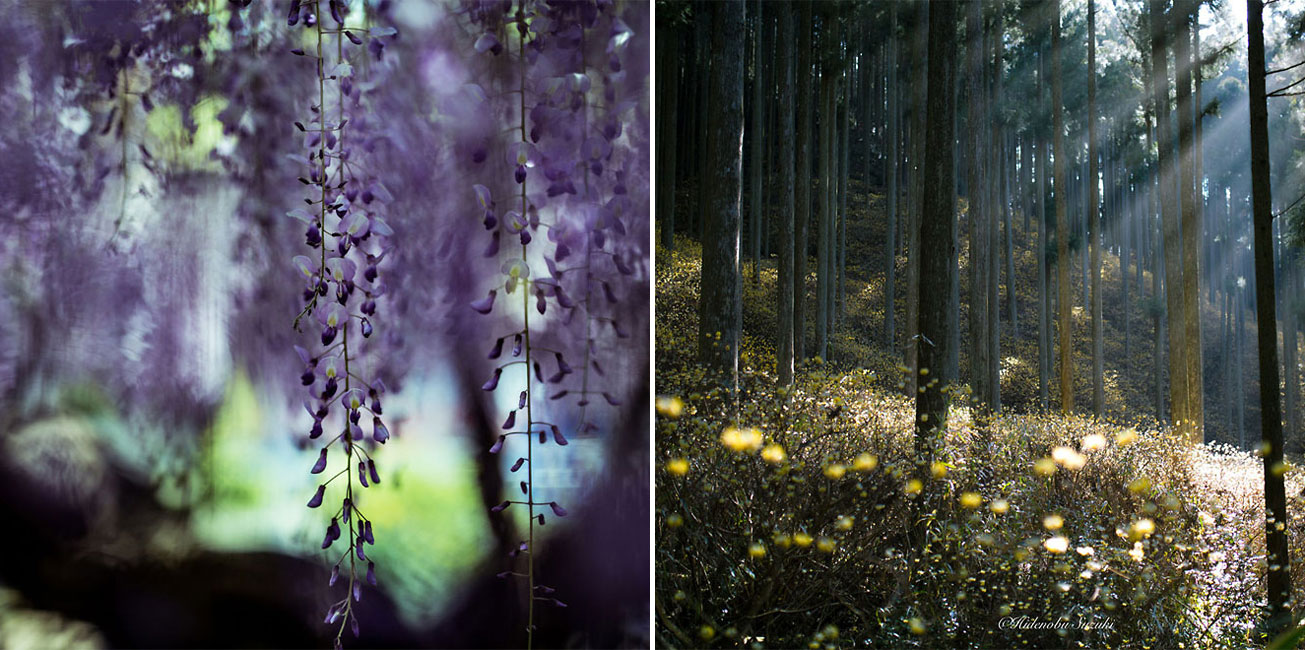 Magical Photos Of Early Spring In Japan Captured By Hidenobu Suzuki