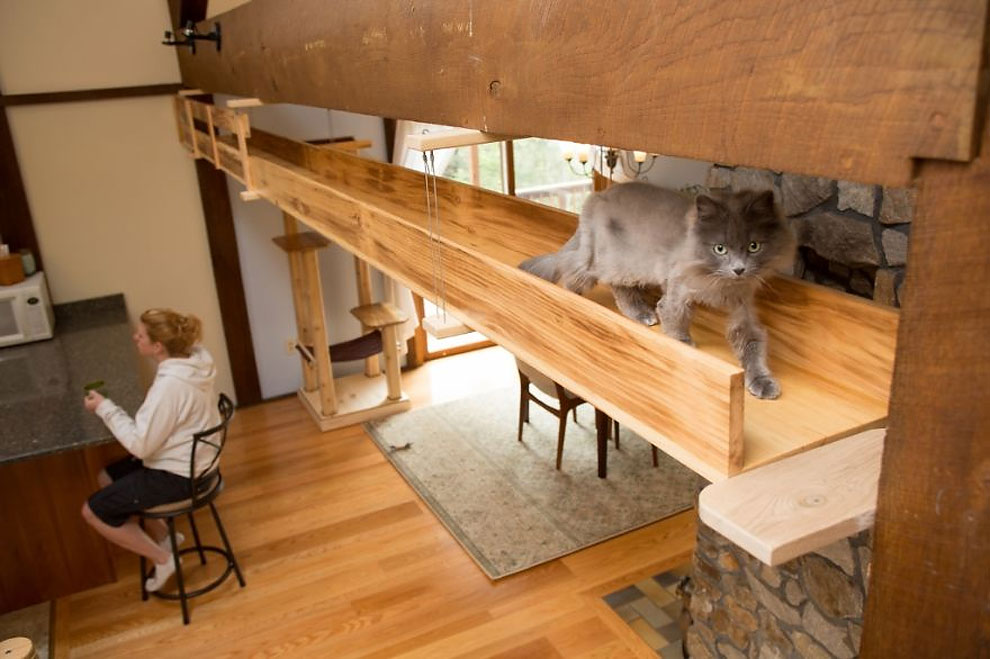 This Woman Turned Her Friend's Home Into A Cat Paradise For Their 7 Kitties