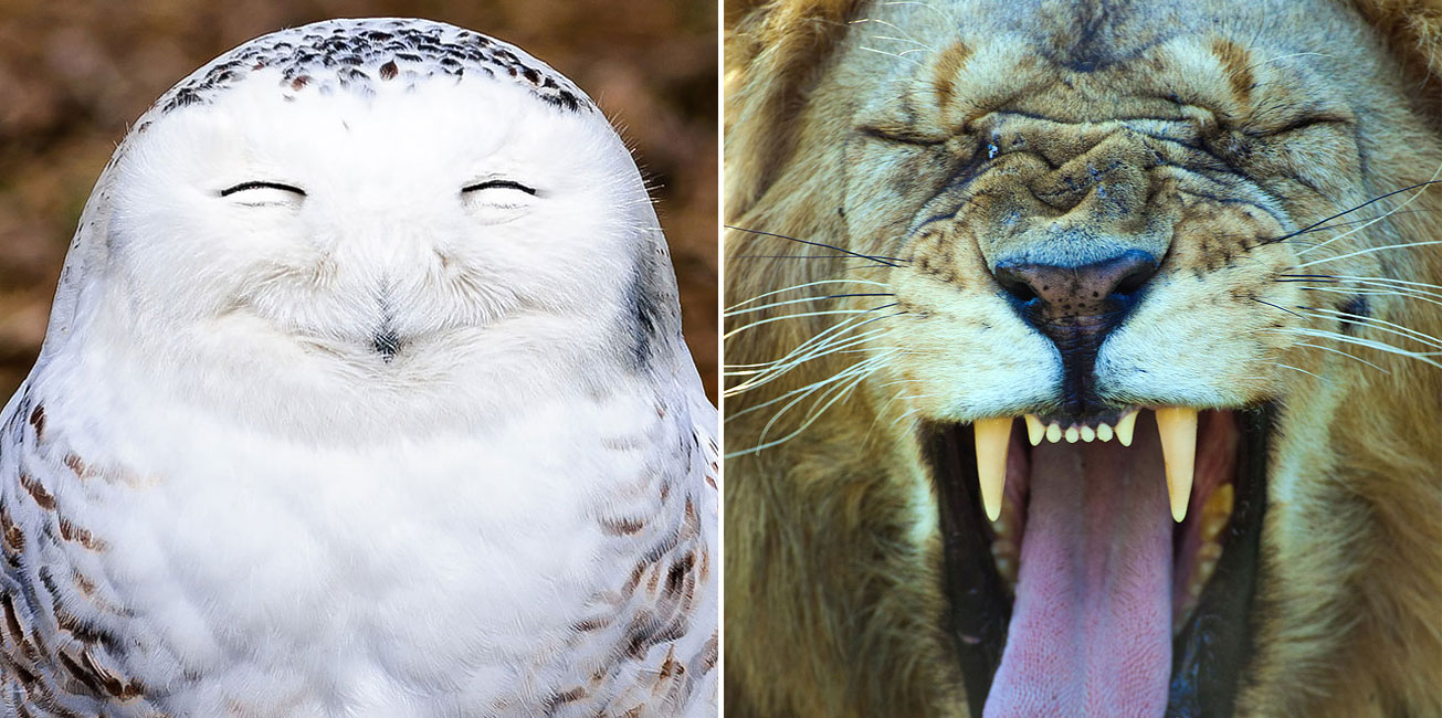 Hilarious Winners Of The 2016 Comedy Wildlife Photography