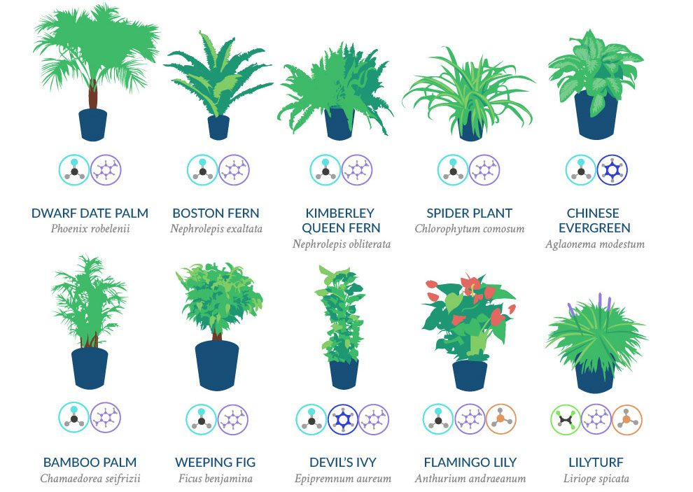 Are More Effective Than Others At Filtering Out Pollutants And Toxic Chemicals In The Air This Infographic Highlights Best Plants