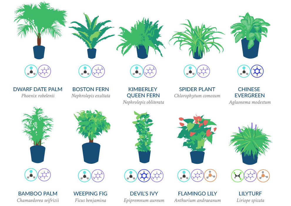 NASA Has Compiled A List Of The Best Air-Cleaning Plants For Your Home