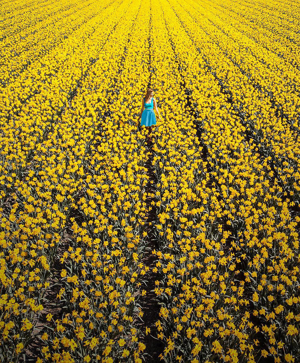 This Is What 7 Million Flowers In The Netherlands Look Like Design