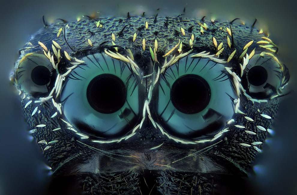 This Extraordinary Close-Up Photos Turns Mundane Insects Into Terrifying Beasts From Another World