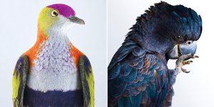 Photographer Leila Jeffreys Captures The Diverse Beauty Of Naturally Colorful Birds